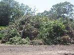 Trees, Tree Stumps, Brush